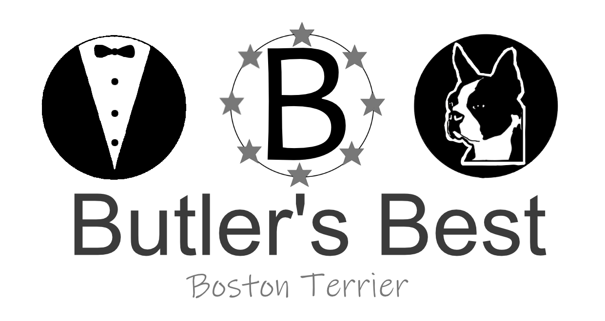Butler's Best Boston Terrier